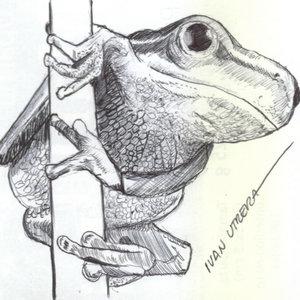 frog01_340612.jpg