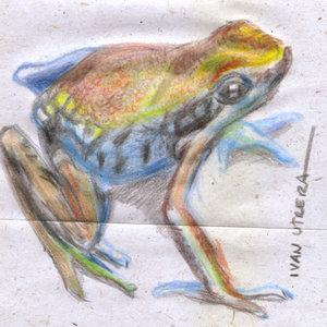 frog_340610.jpg