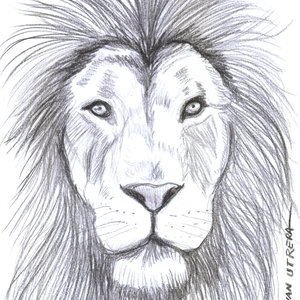 lion01_340624.jpg