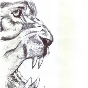 lion02_340611.jpg