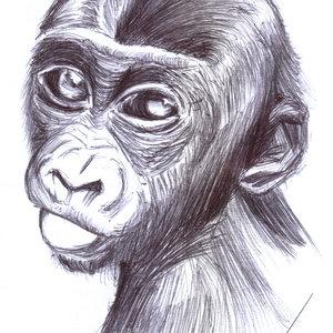 gorilla_340929.jpg