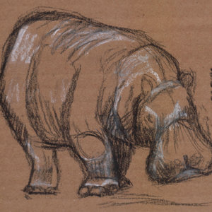 hipopotamo_341020.jpg