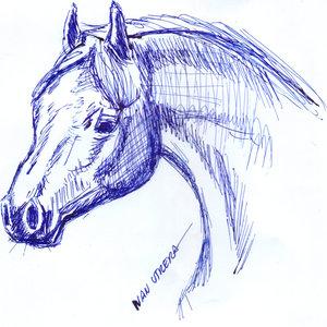 horse02_341190.jpg