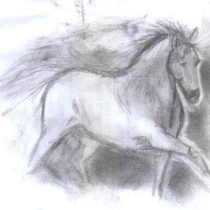 horse03_341229.jpg
