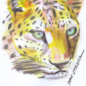 leopardo03_341232.jpg