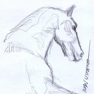 horse04_341305.jpg