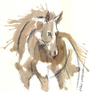 horse05_341349.jpg
