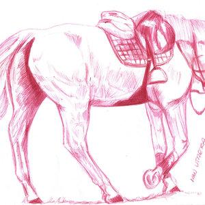 horse06_341539.jpg