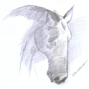 horse12_341597.jpg