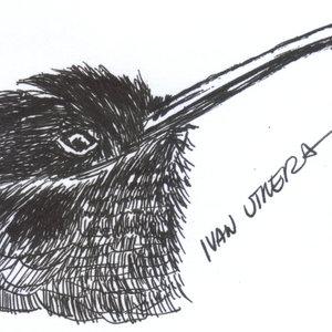 hummingbird_341599.jpg