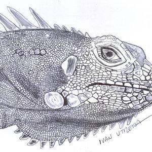 iguana01_341587.jpg