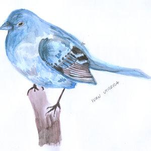 bird2_306812.jpg