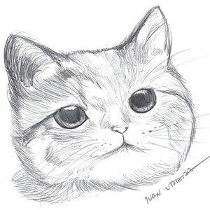 cat_306978.jpg