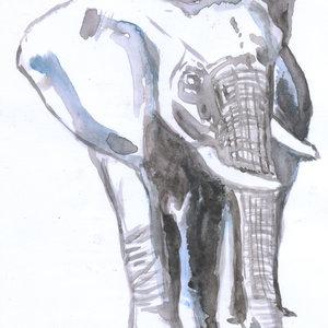 elefante_307083.jpg