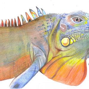iguana_307112.jpg