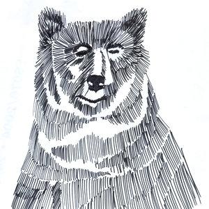 bear_307215.jpg