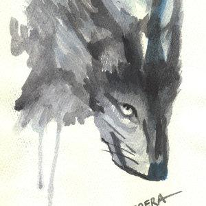 wolf_307233.jpg