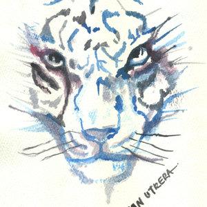tiger01_307671.jpg