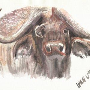 buffalo_307899.jpg