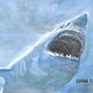 shark0_307790.jpg