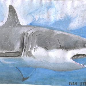 shark_307930.jpg