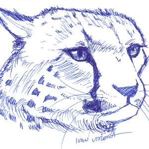 cheetah_308247.jpg