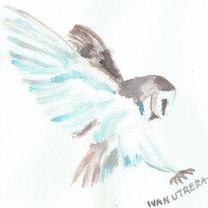 owl07_308371.jpg