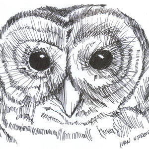 owl09_308309.jpg