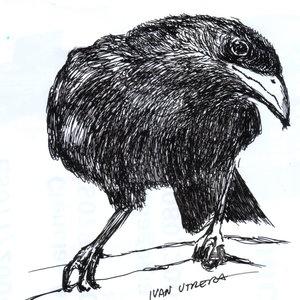 crow_308421.jpg