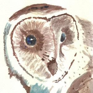owl05_308428.jpg