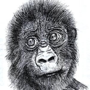 gorila_308861.jpg