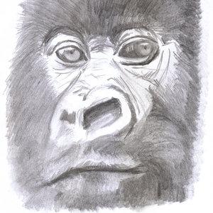 gorila1_309017.jpg