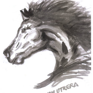 horse06_309023.jpg