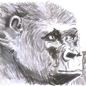 gorila2_309090.jpg