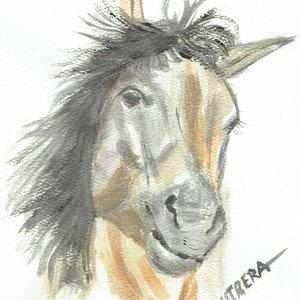horse11_309173.jpg