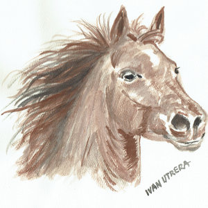 horse07_309348.jpg