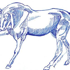horse08_309350.jpg