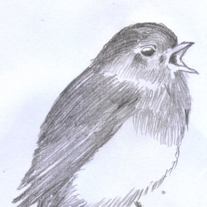 bird31_310027.jpg