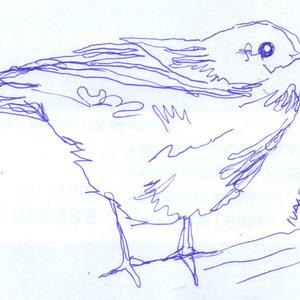bird30_310467.jpg