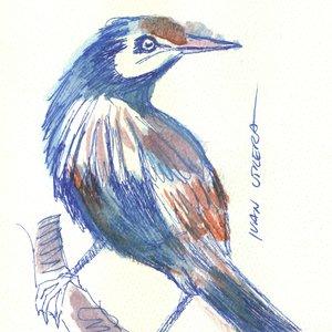 bird18_310640.jpg