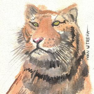 tigre14_310632.jpg