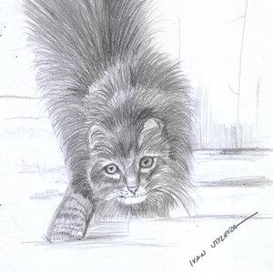 cat02_310822.jpg