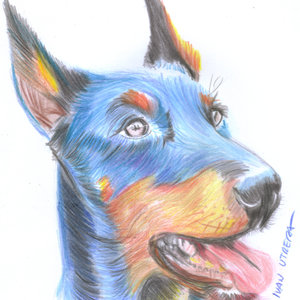 dog_310790.jpg