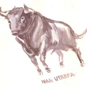 bull02_310906.jpg