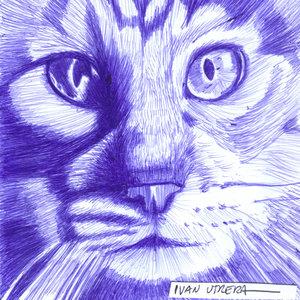 cat09_310910.jpg