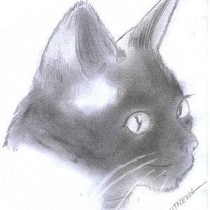 cat10_310929.jpg