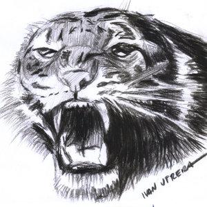 tigre10_310932.jpg
