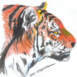 tigre13_310931.jpg
