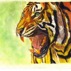 tigre_311050.jpg