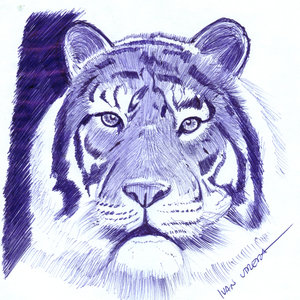 tigre09_311114.jpg